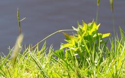 Берег травы прерии Стоковое фото RF