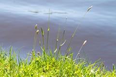 Берег травы прерии Стоковое Изображение RF
