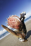 берег устрицы Стоковое фото RF
