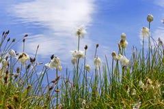 берег цветков Стоковые Фото