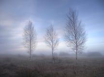 Береза в тумане утра, предыдущая весна Стоковые Изображения RF