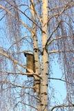 Береза и birdhouse Стоковые Фотографии RF
