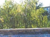 Береза на день лета солнечный от крыши стоковое фото