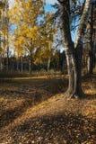 Береза осени Стоковые Фото