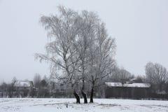 3 березы в изморози и деревне Стоковые Фотографии RF