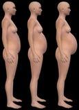 Беременная, беременность, младенец, ставит Illustraton Стоковая Фотография RF