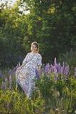 Беременная девушка идет до зацветая lupine поле 1678 стоковое изображение rf