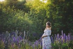 Беременная девушка идет до зацветая lupine поле 1677 стоковые фотографии rf