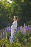 Беременная девушка идет до зацветая lupine поле 1680 стоковое фото rf
