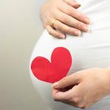 Беременная женщина держа в сердце красного цвета руки Нерождённый младенец в животе беременной женщины Стоковая Фотография RF