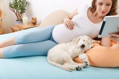 Беременная женщина с ее собакой дома Стоковое фото RF
