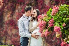 Беременная молодая женщина и ее супруг Счастливая семья стоя на красной изгороди осени, пахнуть гортензией цветка беременное wom стоковая фотография rf