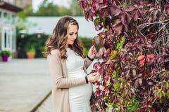 Беременная молодая женщина стоя на красной изгороди осени, держа живот женщина парка супоросая ослабляя Стоковые Фото
