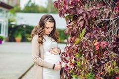 Беременная молодая женщина стоя на красной изгороди осени, держа живот женщина парка супоросая ослабляя Стоковые Фотографии RF