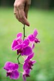 Беременность женщина pregnance с цветком Стоковая Фотография