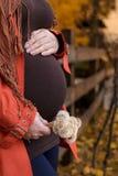 Беременный живот в осени Стоковое Изображение