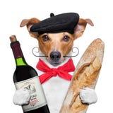 Берет багета вина собаки Стоковое фото RF