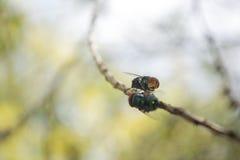 Беседуя муха Стоковые Фотографии RF