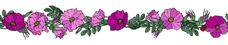 Бесконечная граница щетки с одичалыми розами Лето цветет поздравительная открытка или предпосылка свадьбы иллюстратор иллюстрации Стоковое фото RF