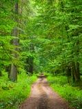 Бесконечная дорога леса Стоковая Фотография RF