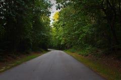 Бесконечная дорога между рощей Стоковые Изображения RF