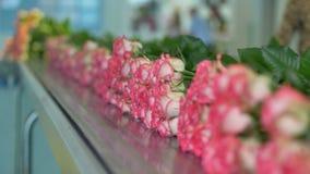 Бесконечная строка белых и розовых цветков двигая более близко в фокус сток-видео