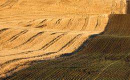 Бесконечное поле осенью Стоковые Изображения