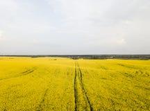 Бесконечное поле рапса рапс поля Желтые поля рапса и голубое небо с облаками в солнечной погоде Сельское хозяйство Стоковое Изображение RF