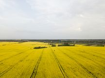 Бесконечное поле рапса рапс поля Желтые поля рапса и голубое небо с облаками в солнечной погоде Сельское хозяйство Стоковая Фотография RF