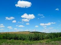 Бесконечное поле тростников стоковые фотографии rf