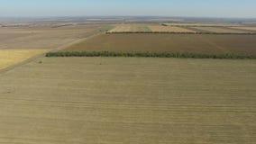 Бесконечные поля после урожая пшеницы сбора вид с воздуха сток-видео