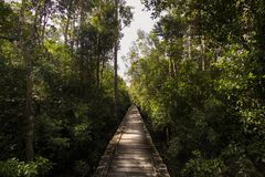 Бесконечный деревянный путь в середине джунглей Стоковые Фотографии RF