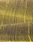 бесконечный зеленый цвет поля Стоковые Фото
