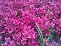 Бесконечный сад стоковые фотографии rf