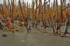 Беспорядок в тростниках Стоковое Изображение