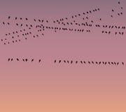Беспроволочные сообщения и птицы бесплатная иллюстрация