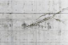 Бетонная стена картины с малым заводом стоковое фото