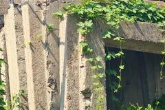 Бетонные конструкции и зеленые растения Стоковая Фотография