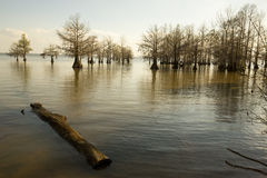 Бечевник Мариона озера в охраняемой природной территории Santee национальной, южной Стоковое Изображение RF