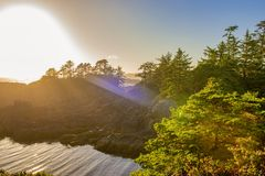 Бечевник на одичалом Тихом океан следе в Ucluelet, острове ванкувер, b Стоковое Фото