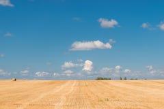 Беларусь сжала поля стоковое фото
