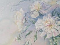 Белая акварель пионов Стоковое Изображение