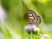 Белая бабочка на цветке Стоковые Изображения RF