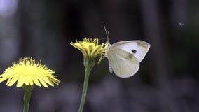 Белая бабочка стоковое изображение