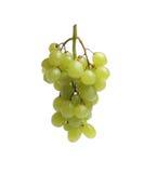 Белая виноградина, зеленая Стоковое Изображение