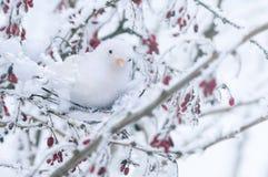 Белая декоративная птица сидит на дереве Стоковая Фотография