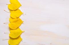 Белая деревянная предпосылка с славными желтыми листьями стоковое изображение rf