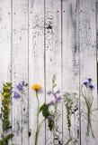 Белая деревянная предпосылка с цветками Стоковое Фото