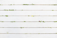 Белая деревянная предпосылка с элементами лета, пустыми Стоковые Изображения