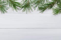 Белая деревянная предпосылка украсила зеленые ветви ` s сосны Стоковая Фотография RF